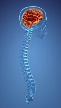 spine-and-brain